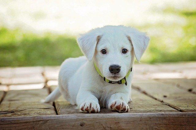 štěně na terase